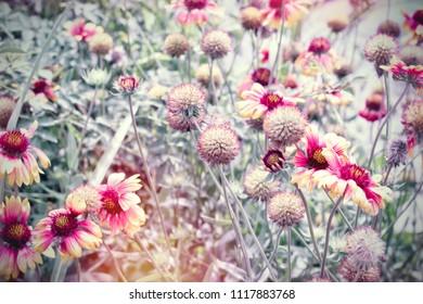 Beautiful flowering flowers in flower garden, yellow flowers lit by sunlight