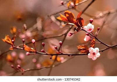 Beautiful flowering Japanese cherry - Sakura. Background with flowers on a spring day. (Version 3)