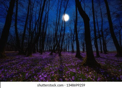 Beautiful flowering meadow with a wild purple crocus or saffron flowers in moonlight against an oak forest background, amazing night landscape, early spring in Europe