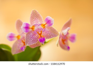 beautiful flowering orchid
