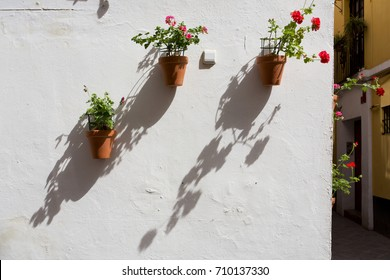 Beautiful flowerpots in Seville, Andalusian town, Spain
