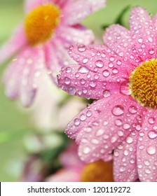 Beautiful flowers after the rain