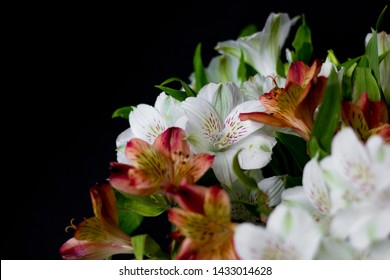 Beautiful flowers Alstroemeria white red maroon