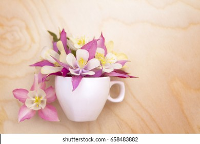 Beautiful flowers Aquilegia  in a white cup.