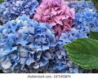 Beautiful flowers background. Blue flowers.