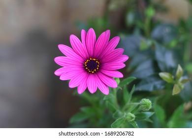 Beautiful Flowers Blooming In The Garden, Bodrum Turkey