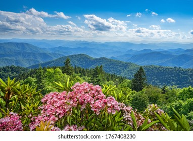 Beautiful flowers blooming in the  mountains. A panoramic view of the Smoky Mountains from the Blue Ridge Parkway .Summer mountain landscape. Near Asheville ,Blue Ridge Mountains, North Carolina, USA.