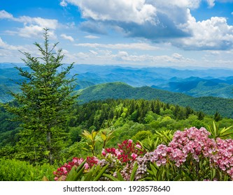 Beautiful flowers blooming in the  mountains.  View of the Smoky Mountains from the Blue Ridge Parkway. Summer mountain landscape. Near Asheville ,Blue Ridge Mountains, North Carolina, USA.