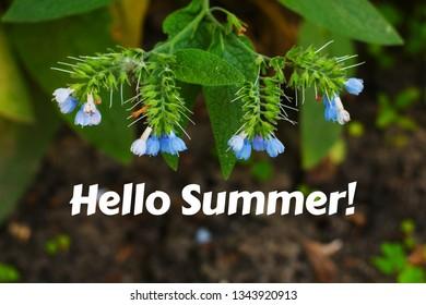 beautiful flowers of blue bells close up