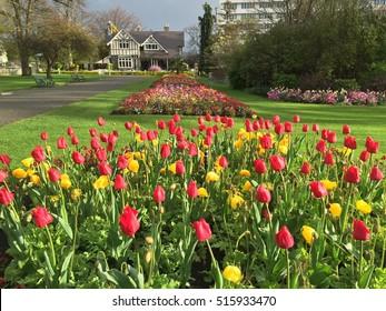 Beautiful flowers in Christchurch Botanic Garden