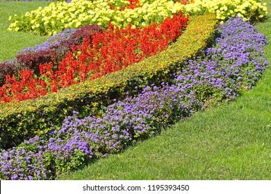 Beautiful flowers in city park at sunny day