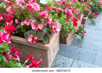 Beautiful flowers in clay pots