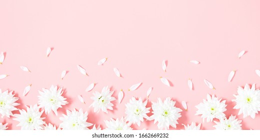 Beautiful flowers composition. Spring minimal concept. White flowers on pastel pink background. Valentines Day, Happy Women's Day. Flat lay, top view, copy space, banner