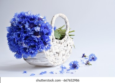 beautiful flowers cornflowers on a white isolated background