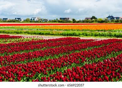 Beautiful flowers field