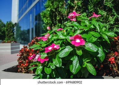 Beautiful flowers in front of an office building with blue windows