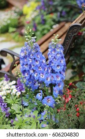 Beautiful flowers in the garden at show flower