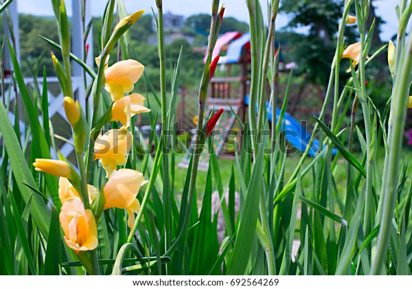 Beautiful flowers in the garden of yellow color among the colorful greenery
