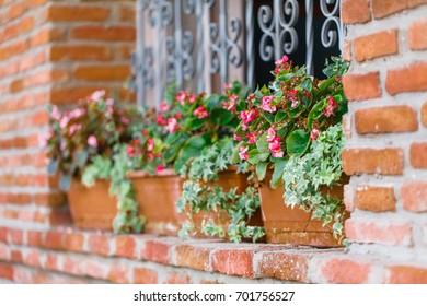 Beautiful Flowers Growing in a Window Garden