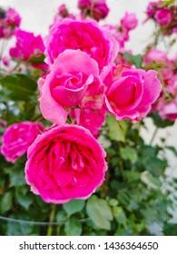 beautiful flowers grows in slovenia