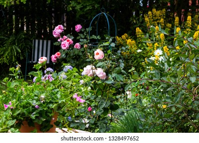 Beautiful flowers in the home garden, roses.