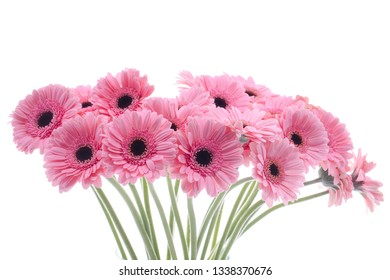 Beautiful flowers isolated on white background