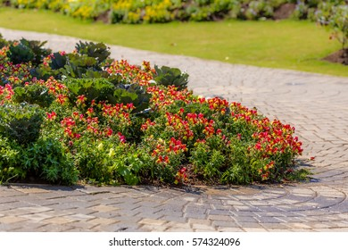 A beautiful flowers landscape of national park , Royal Park Rajapruek Chiang Mai Thailand.