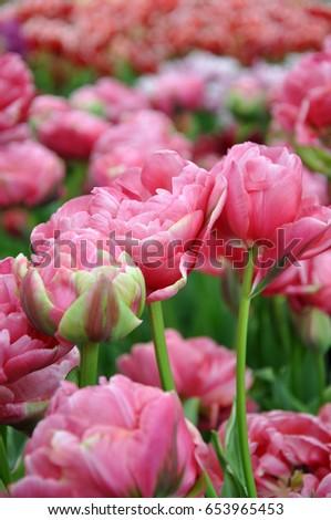 beautiful flowers, beautiful landscape, wallpapers on telephone