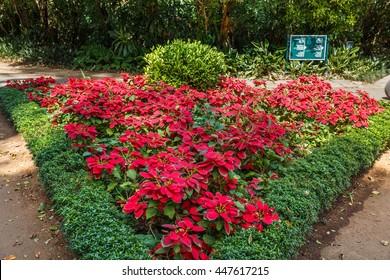 Beautiful flowers landscapes in Peradeniya, Sri Lanka.