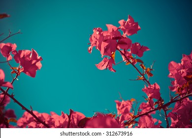 Beautiful flowers with the leaves in the sunshine, vintage retro hipster image with summer bloom. Autumn pink flowers
