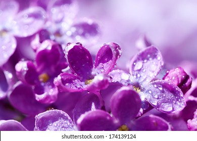 beautiful flowers of a lilac blossom in the spring
