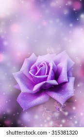 beautiful flowers made with color filters, flower on white: a pink rose