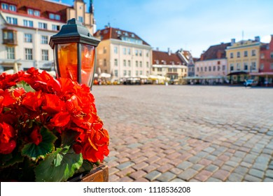 Beautiful flowers in the middle of Tallinns old town.