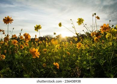 Beautiful flowers in morning