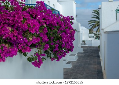 Beautiful flowers on the railing of white houses for holidaymakers in Costa Teguise on Lanzarote island. Route to the ocean. Canary Islands.