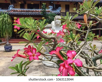 Beautiful flowers on the streets of Vietnam. Wonderful garden with fresh air