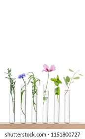 beautiful flowers on test tube in laboratory, scientist experiment on biology and chemistry.