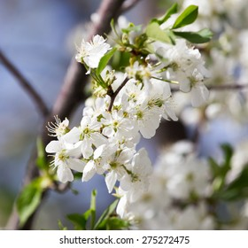 beautiful flowers on a tree