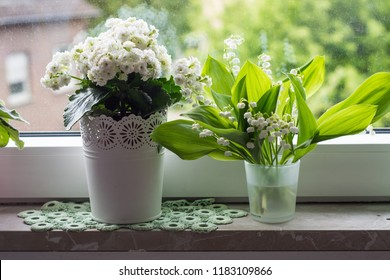 beautiful flowers on the windowsill, white kalanchoe and violet in beautiful pots