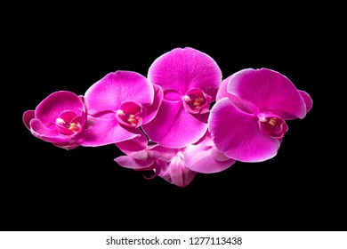 Beautiful flowers of orchid