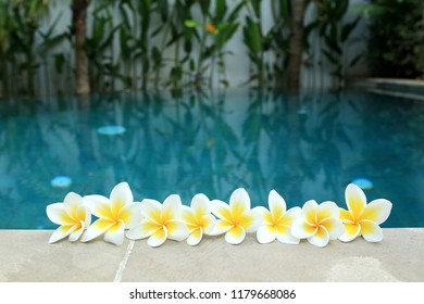 Beautiful flowers in a pool. Spa and wellness flower of Bali.