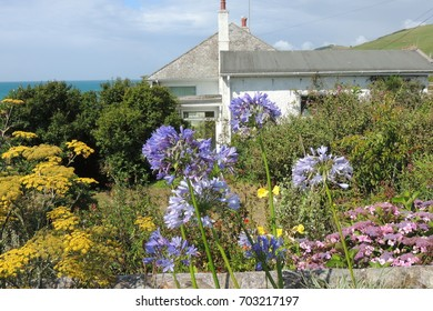 Beautiful flowers in Portwrinkle, Cornwall, with a white house the blue sea beyond