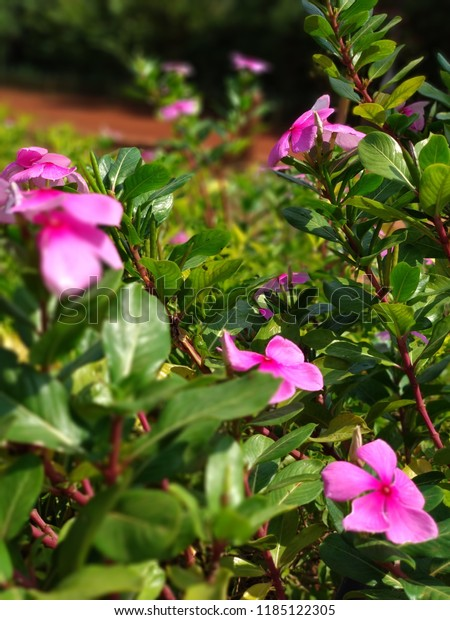 Beautiful Flowers Real Natural Beauty Stock Photo Edit Now