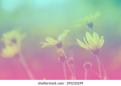 Beautiful flowers with Soft Focus and color filters , nature background