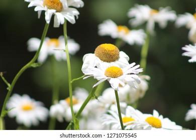 Beautiful flowers taking in the sunlight