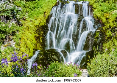 beautiful flowers of Vidae Waterfall at Crater Lake National Park