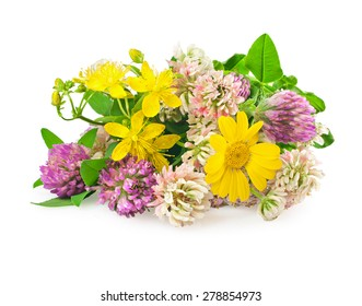 Beautiful flowers of wild medicinal herbs on white background