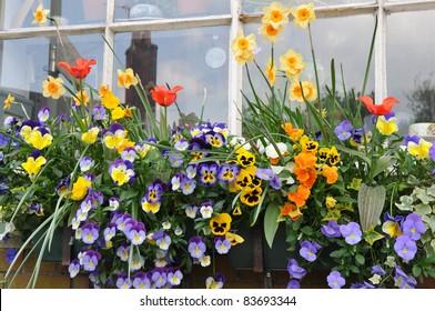 Beautiful Flowers in a Window Garden