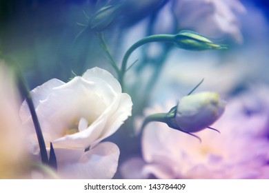 beautiful flowers wit color filters, floral background