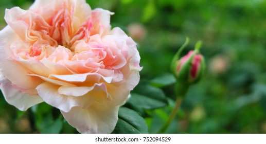 Beautiful flowers,natural background